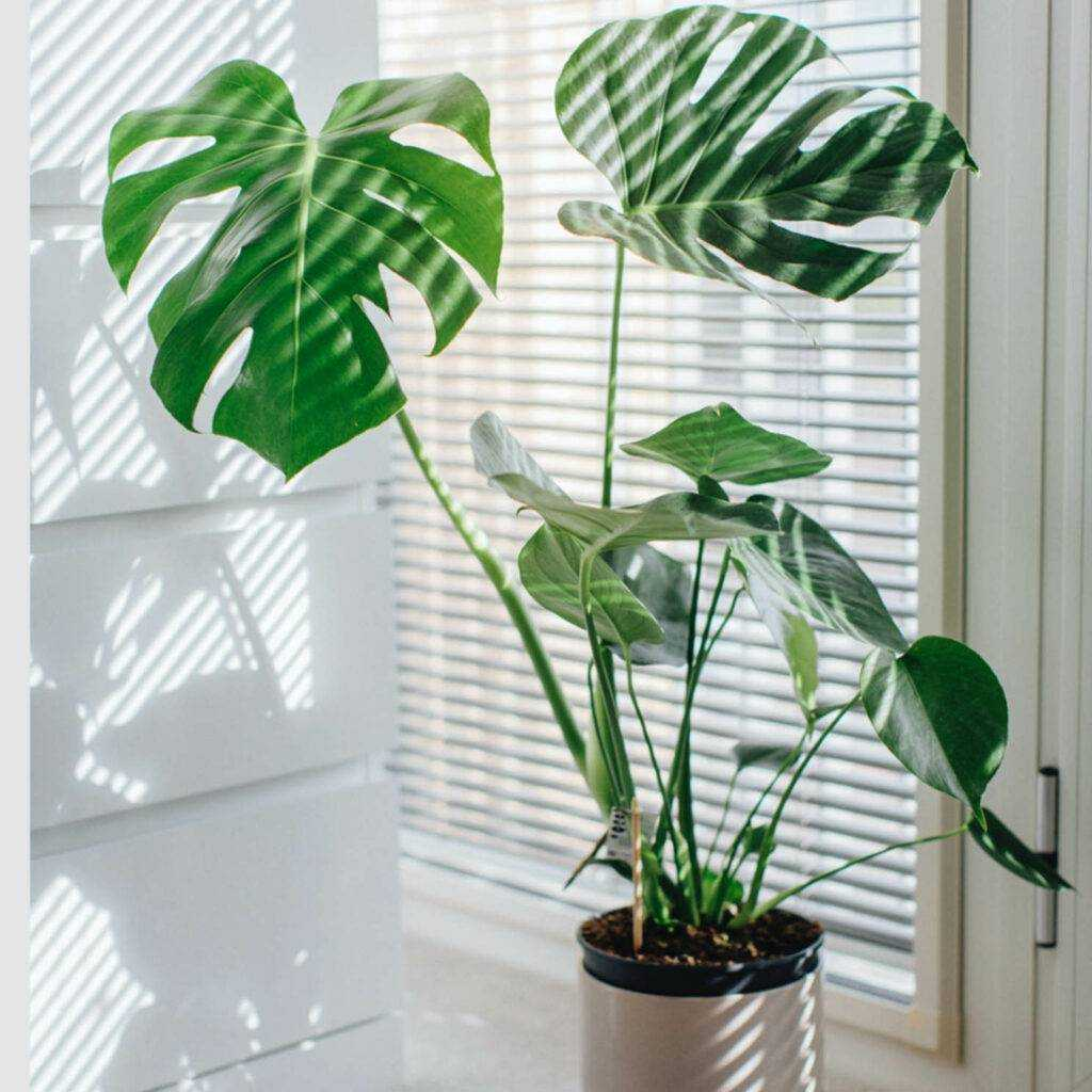 Planter  - en sikker vinner når du skal style leiligheten eller boligen din. et must ved boligstyling.